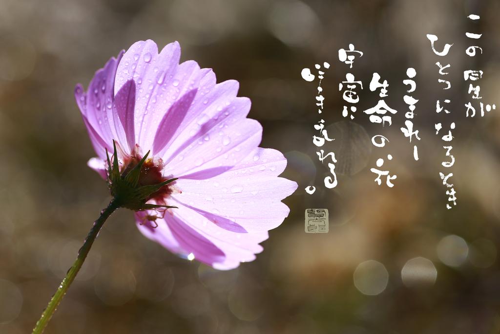 f:id:kentaroyoshiko:20181208003050j:plain