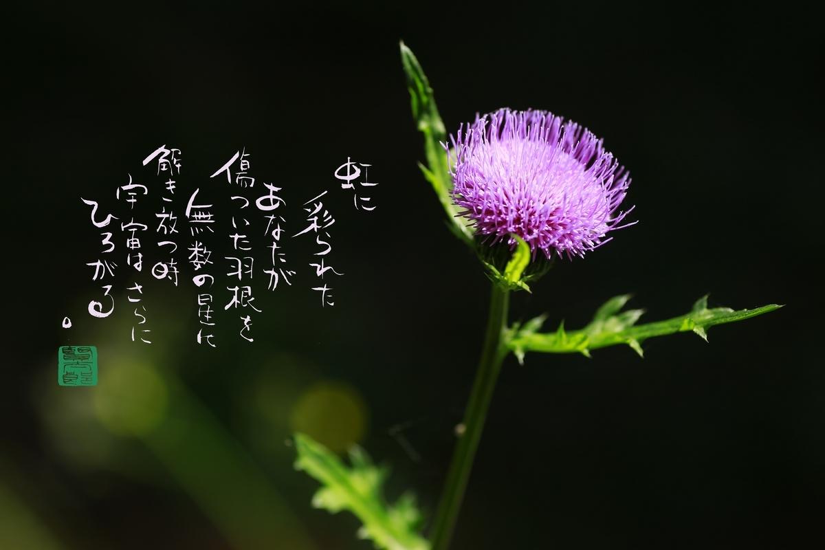 f:id:kentaroyoshiko:20190527224333j:plain