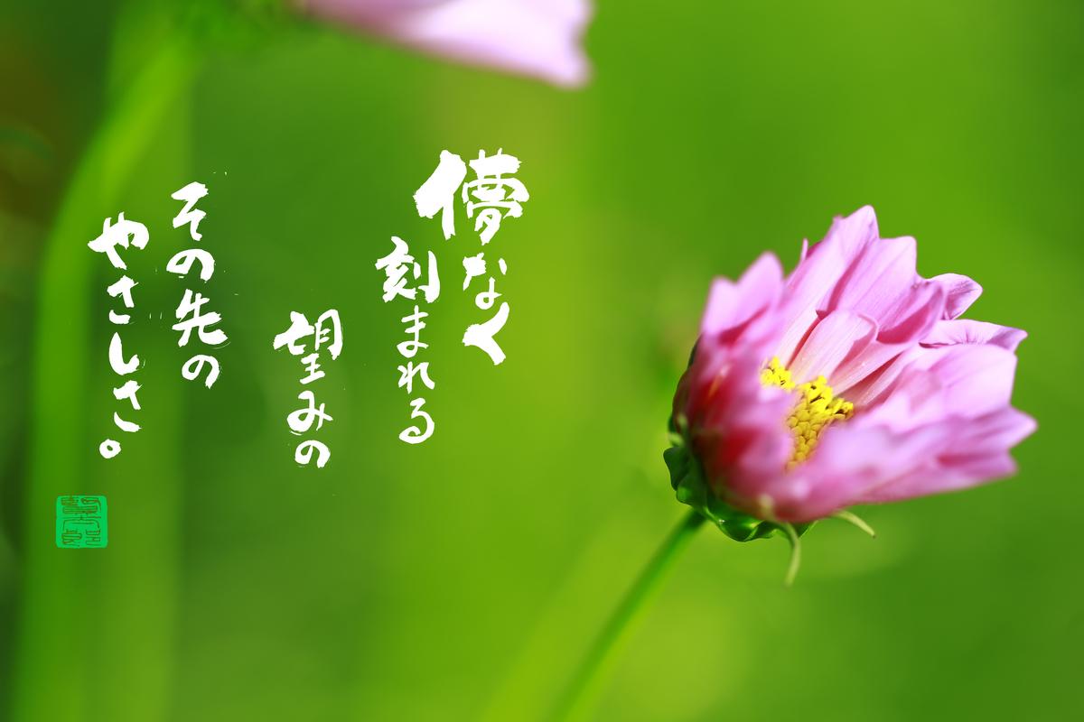 f:id:kentaroyoshiko:20210212171122j:plain