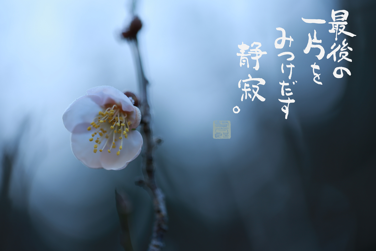 f:id:kentaroyoshiko:20210215173758j:plain