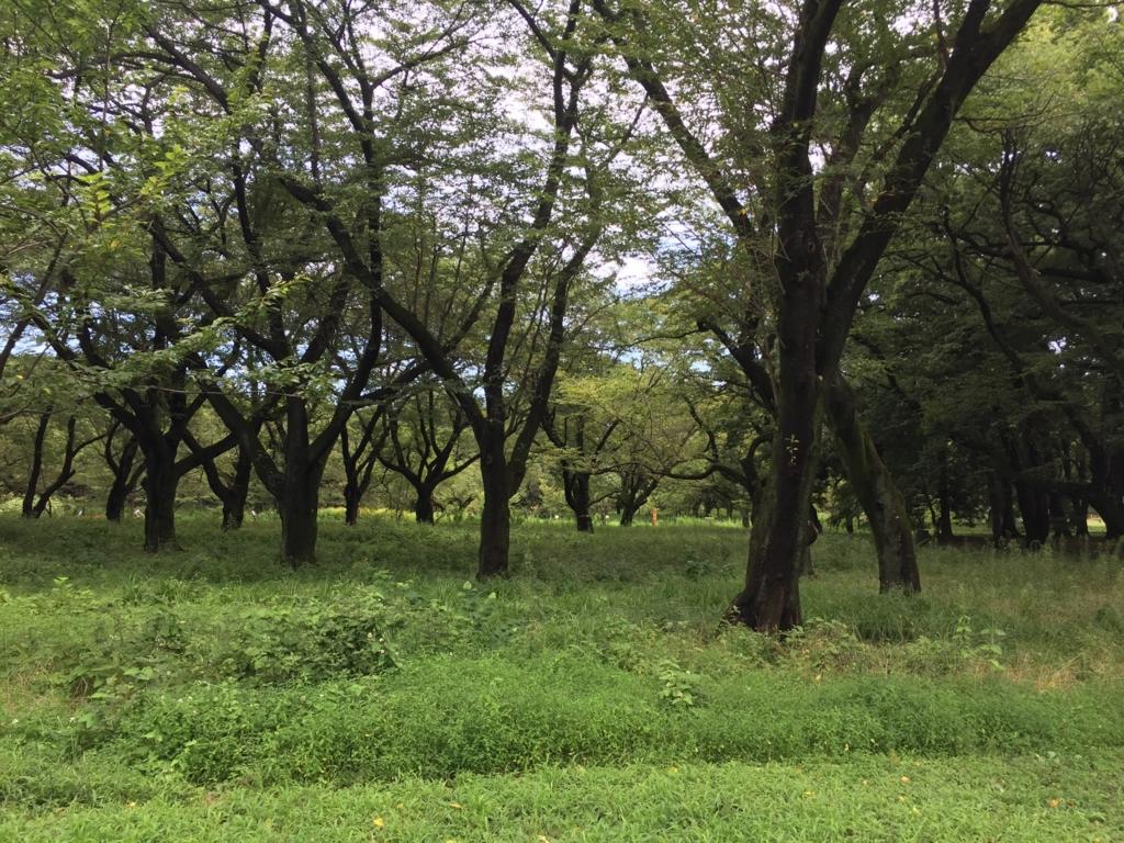 f:id:ketaruchi:20160821211352j:plain