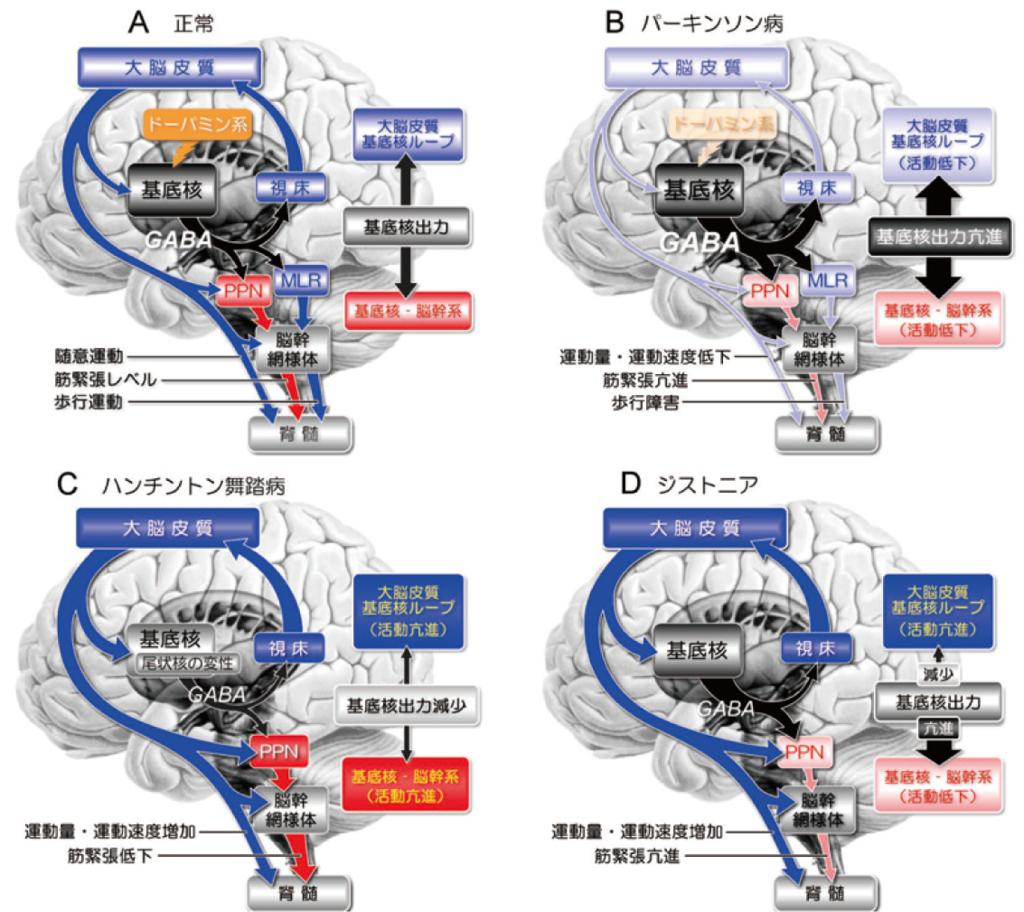 Fig.9 基底核による運動制御の仕組みと基底核疾患における運動障害のメカニズム(作業仮説)