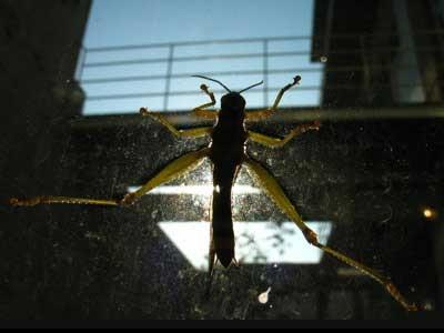 f:id:ketsurikichinkai:20101211175100j:image