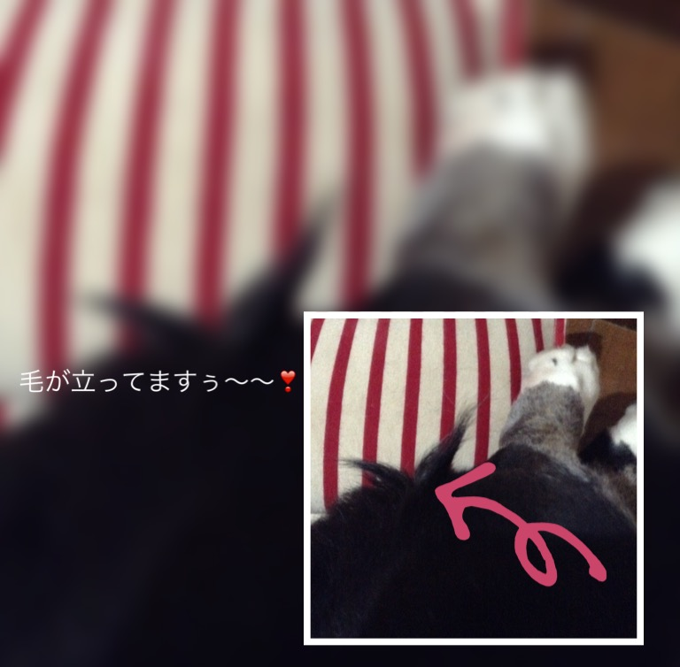 f:id:kevin_debi:20170112215139j:plain