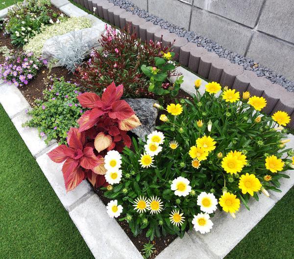 7月末の我が家の花壇