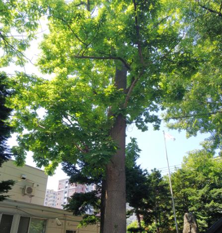 明るい日差しがよく似合う美しい樹木