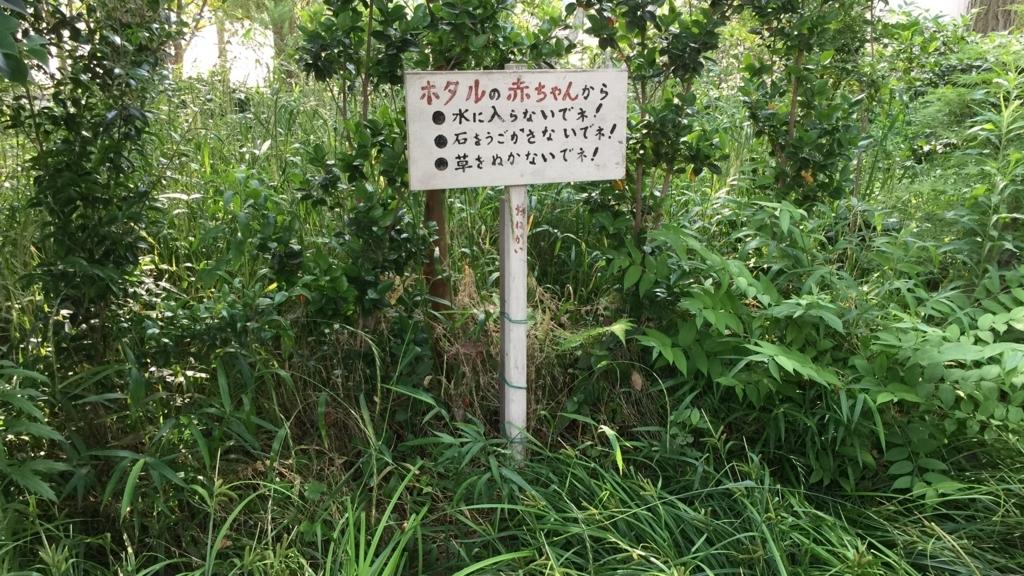 f:id:keystoneforest:20170531214733j:plain