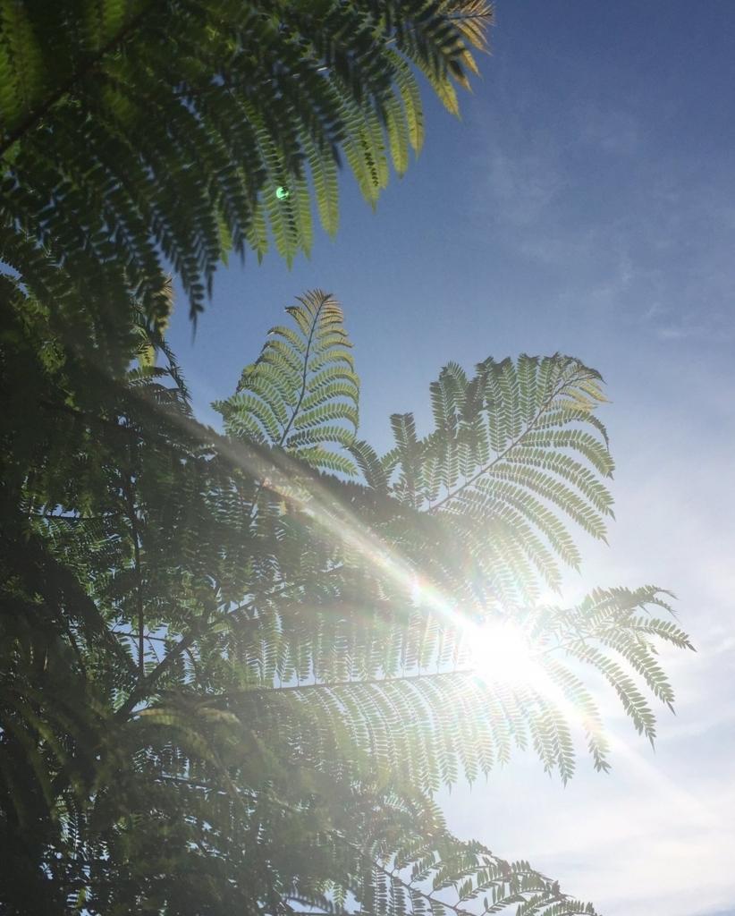 f:id:keystoneforest:20171008221051j:plain