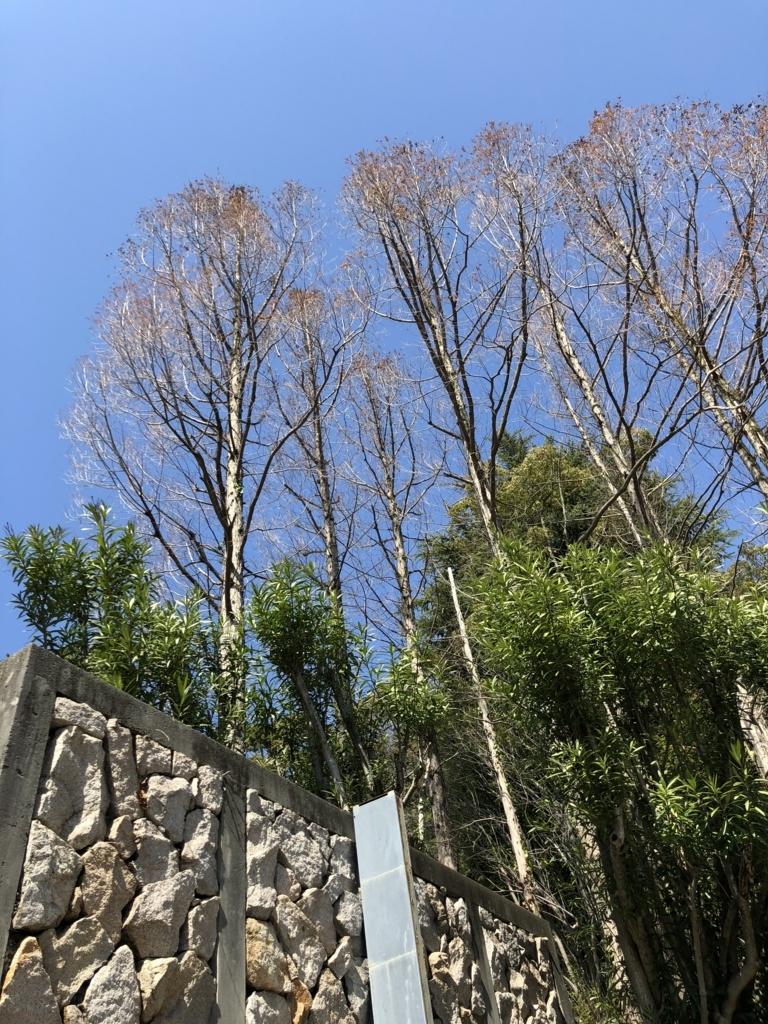 f:id:keystoneforest:20180318083755j:plain
