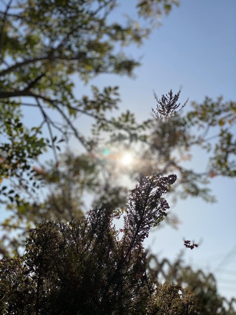 f:id:keystoneforest:20201129221005j:plain