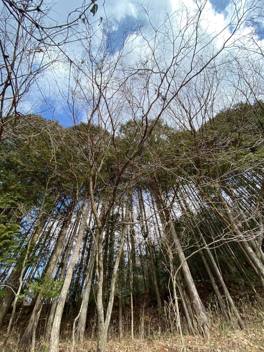 f:id:keystoneforest:20210130225443j:plain