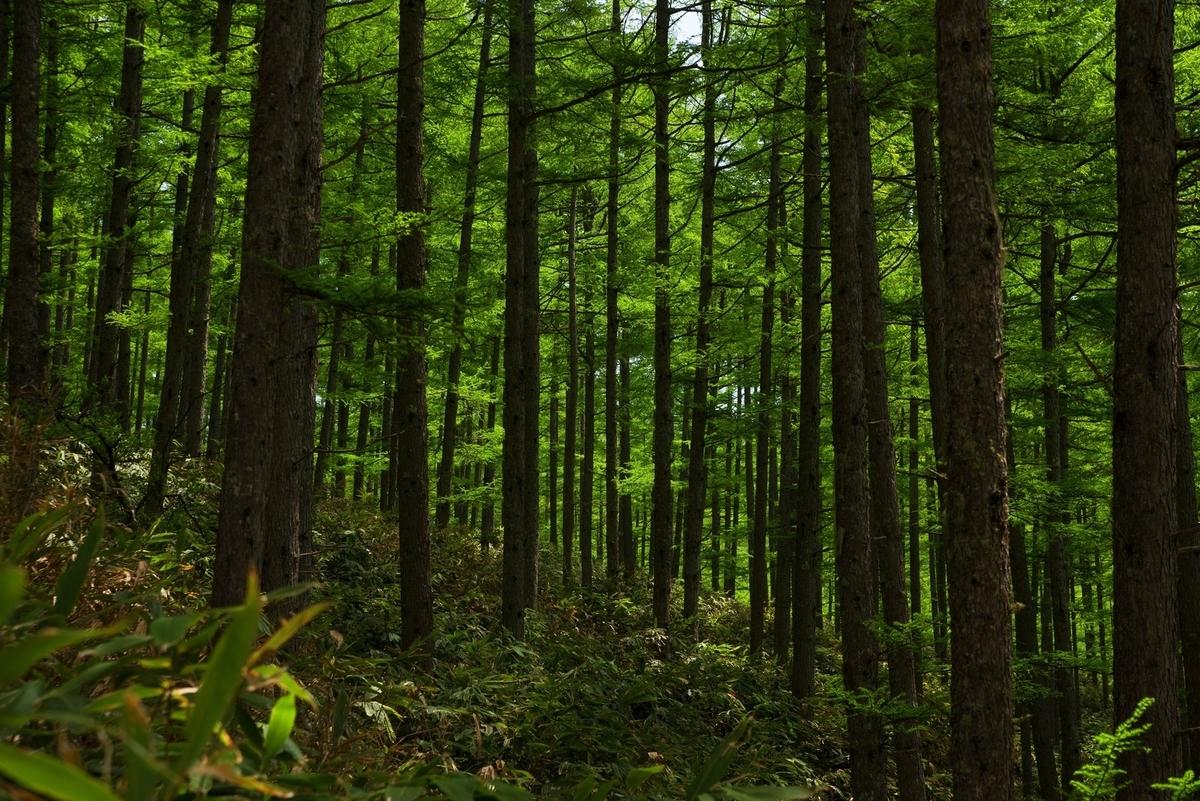 f:id:keystoneforest:20210308215341j:plain