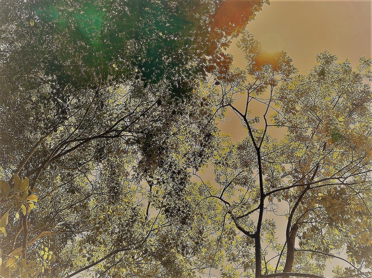 f:id:keystoneforest:20210503121948j:plain