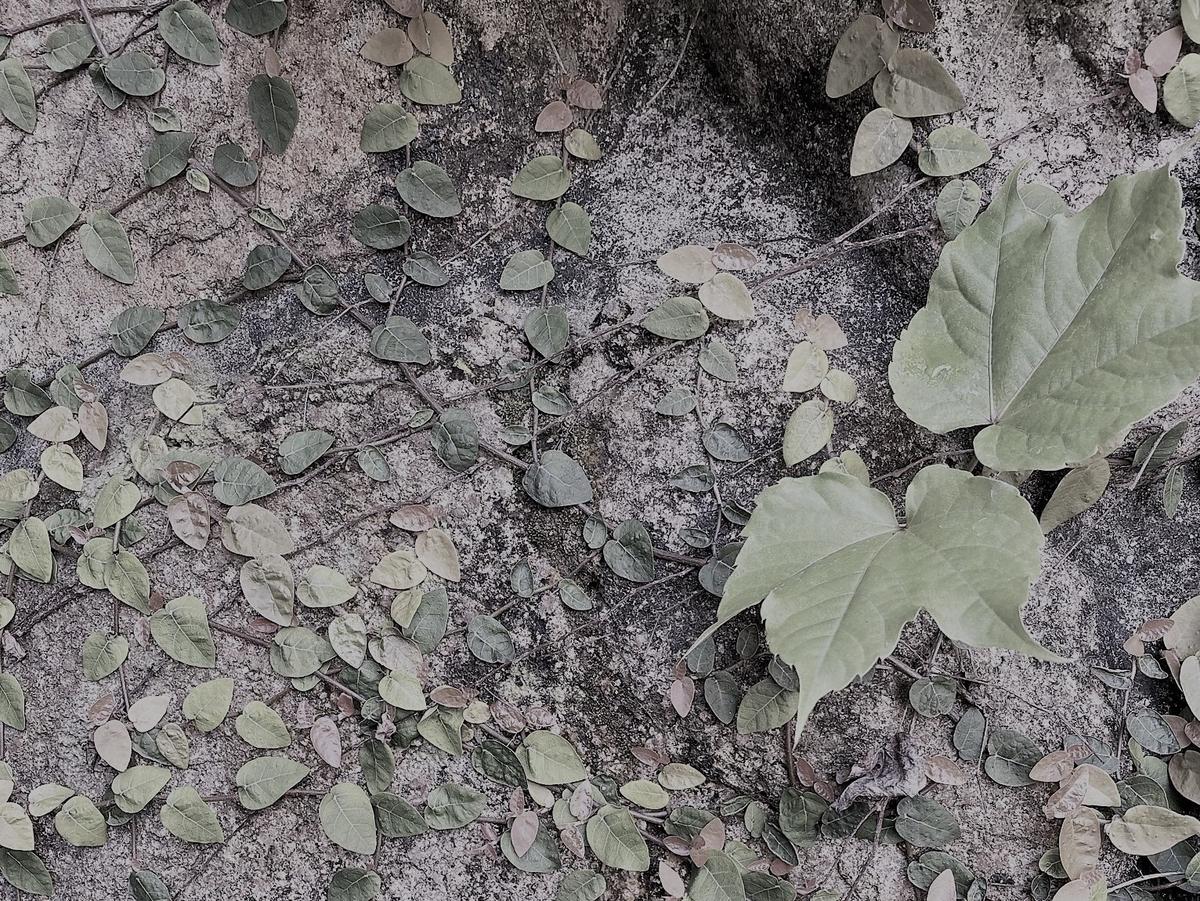 f:id:keystoneforest:20210503133731j:plain