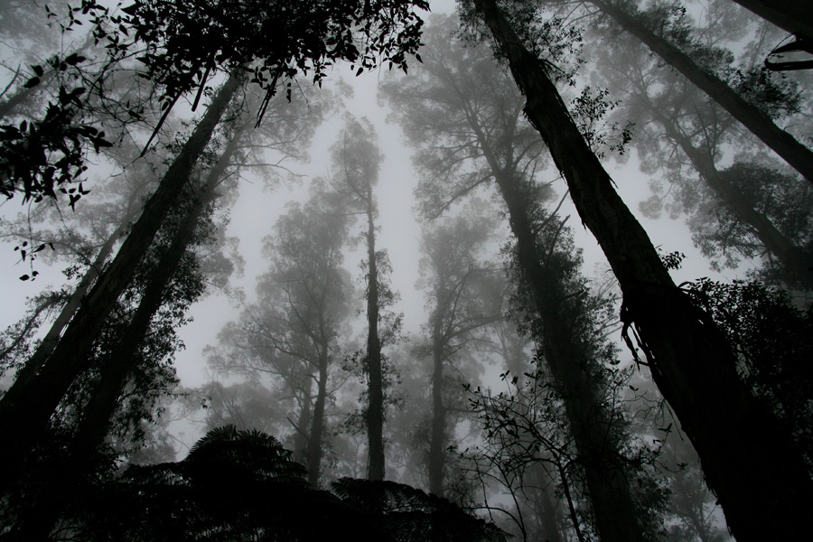 f:id:keystoneforest:20210503150722j:plain