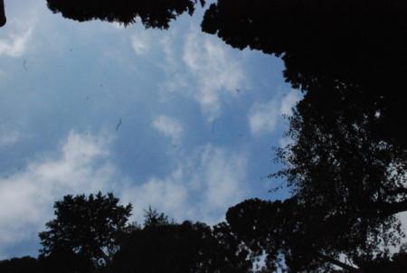 f:id:kgmg:20090921101126j:image