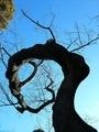 [初詣][木]昇り竜