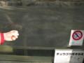 [イヌ][看板]チュウゴクオオカミ