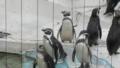 [movie][ペンギン]