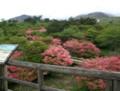 Yahata-no-Tsutsuji,(八幡のツツジ),Nasu-shiobara,Tochigi-trip2002