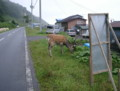 EzoShika-01,RausuCho,Todowara-hokkaidoTrip2002