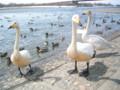 p01,Swan-in-AquaPark,TokachiGawa-onsen,trip-Hokkaido-200604