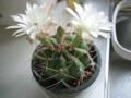 flower-cactus(Saboten),in-myhome