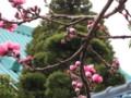 [お散歩] Rokugoh-Yousui-DenenChofuHonCho
