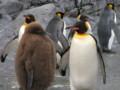 [trp-hokk10]penguin-kan,ZooAsahiyama