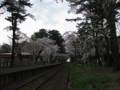 [ao1105]p02,Sakura2011,Ashino-Kouen,Kanagi,Aomori