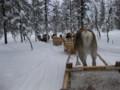 [trp-Finland13]Tunakkay-Zori,Saariselka,LapLand,tour-Finland-2013