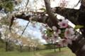 [trp-ao1405]Sakura,NogiwaPark
