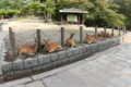 [trp-twi1409]p03,Shika,Nara-koen-Park,Nara