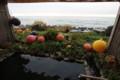 [trp-twi1411]Rotenburo,kashikiri,Minshuku-500-mile,Kojouhama,hokkaido