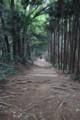 [trp-takao15]Inariyama-course,takao-san-hiking,tokyo