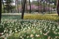 [HitachiKaihin-1604] Suisen-Garden,Hitachi-Kaihin-Koen