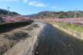 [trp-izu18]Housen-bashi,Kawazu-Sakura-Matsuri,kawazu-cho,shizuoka