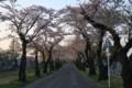 [hometown1805]Sakura-street,Sannai-reien,aomori
