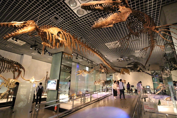 National-Museum-of-Nature-and-Science,Tokyo
