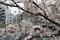 Fureai-K-ji-bashi,Gotanda-shinagawa-tokyo