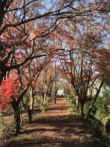 f:id:kichibun:20200102132615j:image