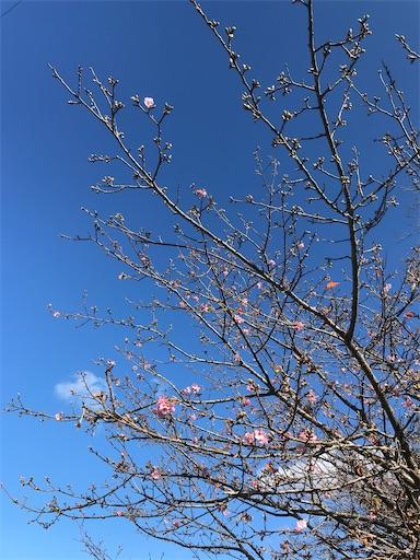 f:id:kichibun:20200130153246j:image