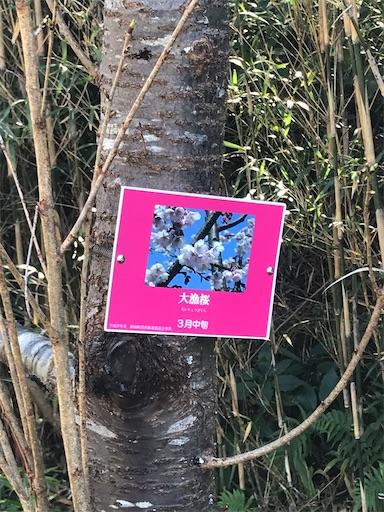 f:id:kichibun:20200130194312j:image