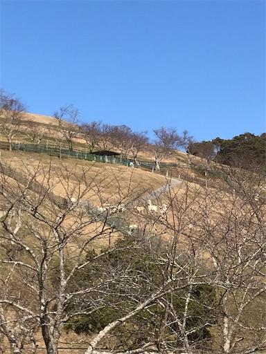 f:id:kichibun:20200130194801j:image