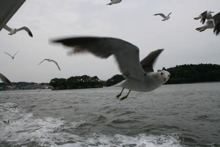f:id:kick:20080801150701j:image