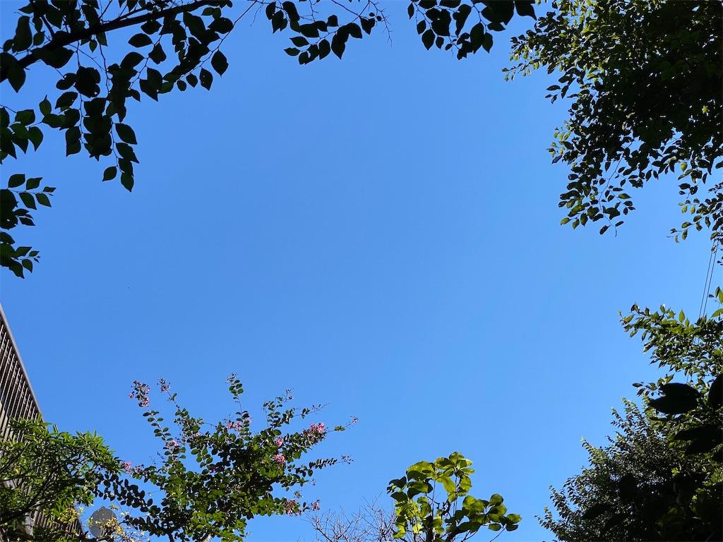 f:id:kicky-kite:20210920092405j:image