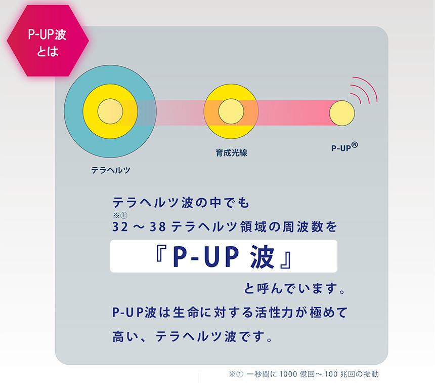 f:id:kidsgroup:20201212121626p:plain