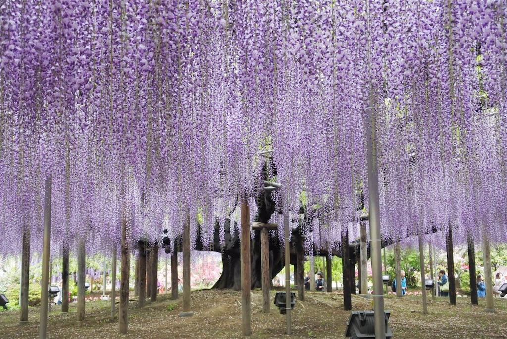 f:id:kifujinnotawamure:20180424190116j:image