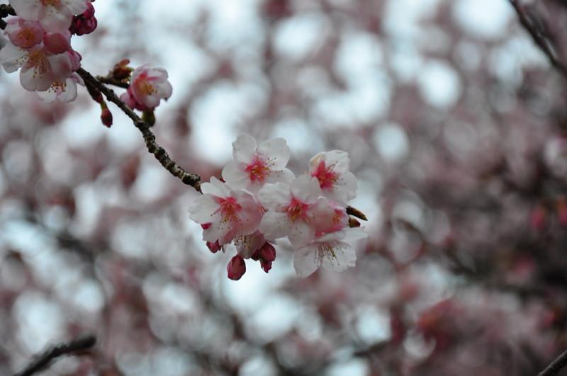 f:id:kifuyu:20100214145931j:image