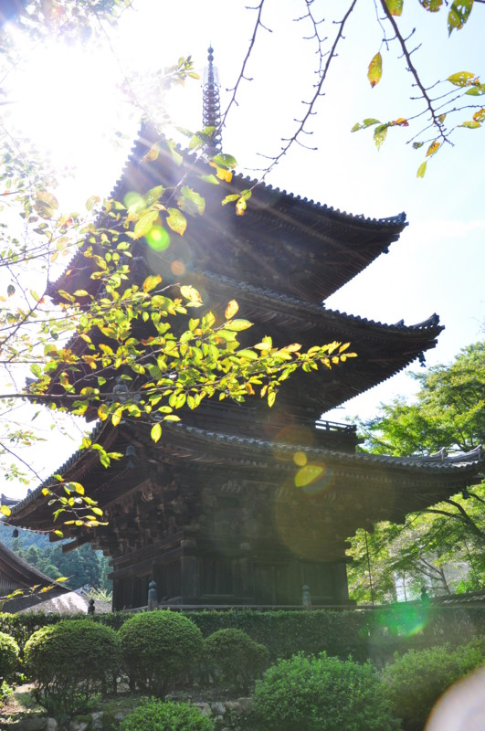 f:id:kifuyu:20101011123258j:image